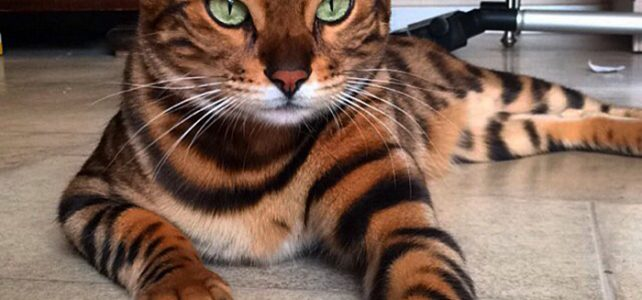 Top 3 most beautiful cats in the world